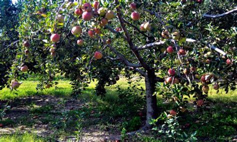 planter un arbre fruitier en pot planter et entretenir un arbre fruitier en 4 233 trucs pratiques