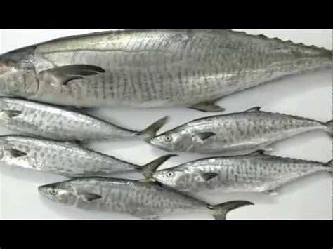 fish names  english  tamil  images