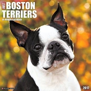Whispering Pines Kennel Boston Terrier Breeder In Carmel