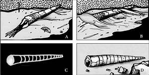 Wisconsin Geological  U0026 Natural History Survey  U00bb Fossil