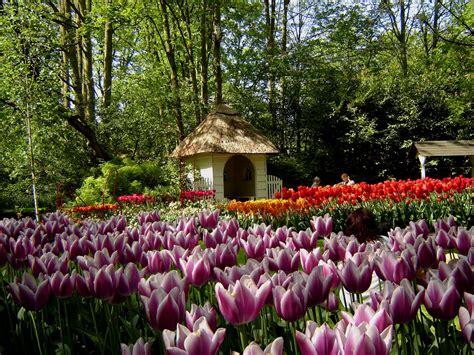 1920x1080 beautiful tulips garden take a look this beautiful keukenhof park in holland places boomsbeat