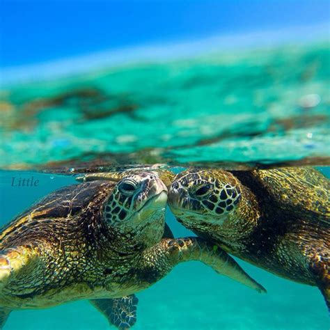 He snapped at a flea. Turtle love | Clark Little Photographs | Pinterest ...