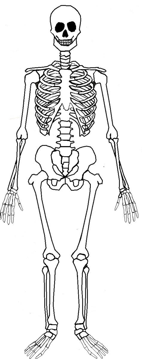 skeleton template montessori workjobs montessori nomenclature free human skeleton 3 part cards book