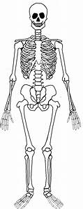 Montessori Workjobs  Montessori Nomenclature Free Human Skeleton 3 Part Cards  U0026 Book