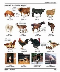 Farm Animals in Hindi: Hindi @ Universiteit Leiden ...