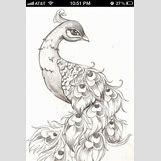 Colorful Peacock Tattoo Drawing | 640 x 960 jpeg 63kB