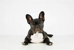Animaux Décoration Intérieure : les animaux aussi ont une vie int rieure ~ Teatrodelosmanantiales.com Idées de Décoration