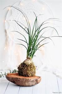 Entretien Plante Verte : plante facile entretien free lintrieur laloe vera est une plante dpolluante dcorative with ~ Medecine-chirurgie-esthetiques.com Avis de Voitures