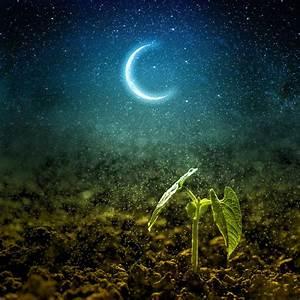 Jardiner Avec La Lune : comment jardiner avec la lune le calendrier lunaire de 2019 ~ Farleysfitness.com Idées de Décoration