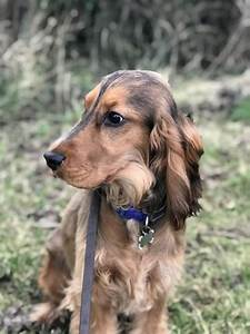 category residential dog gundog training preston With residential dog training