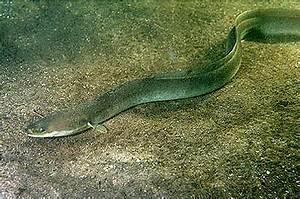 Süßwasserfische Fürs Aquarium : naturerlebniszentrum m ritzeum fotogalerie foto 2 ~ Lizthompson.info Haus und Dekorationen