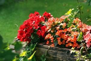 Blumen Für Schattigen Balkon : die 11 sch nsten balkonpflanzen ~ Orissabook.com Haus und Dekorationen