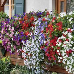 balkonblumen pflanzen pflege und tipps mein schoener garten