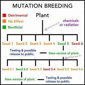 Mutation Breeding Diagram
