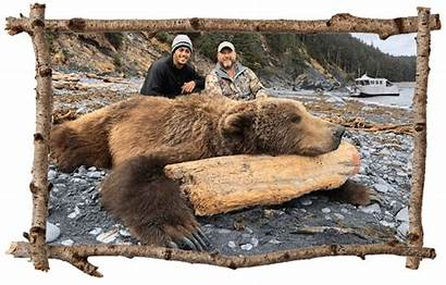Bear Hunting Kodiak Brown Alaska Afognak Hunt