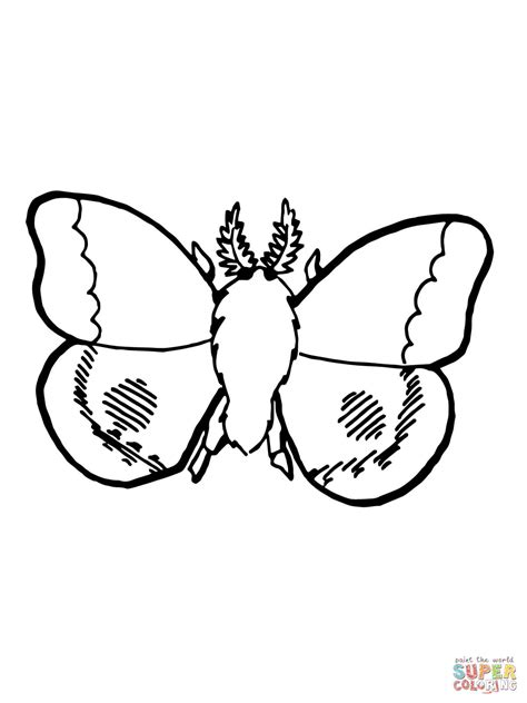 nocturnal moth coloring page  printable coloring pages