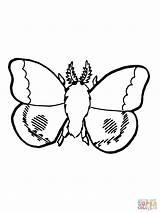 Coloring Moth Popular sketch template