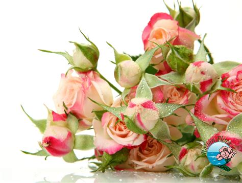 fiori in italia invio fiori nel mondo su italian flora consegna fiori da