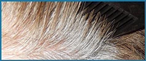 Wie Oft Darf Man Haare Farben  Moderne Männliche Und