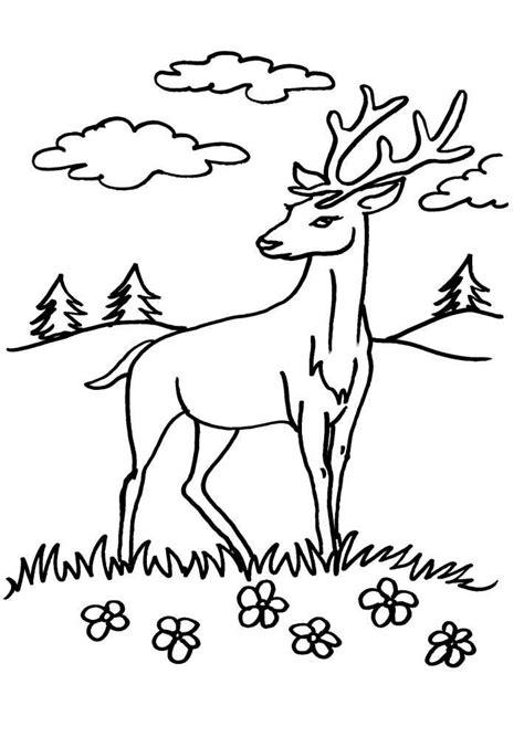 lupo disegno facile per bambini cerb planse de colorat si educative