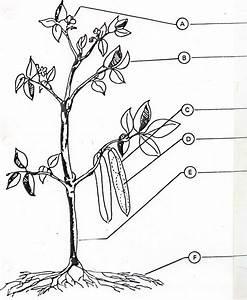 Plant Parts Worksheets
