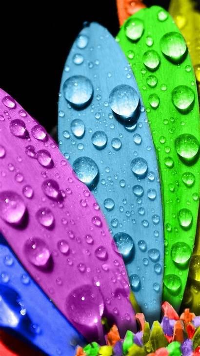 Colorful Iphone 4k Screensaver Flower Wallpapers Screensavers
