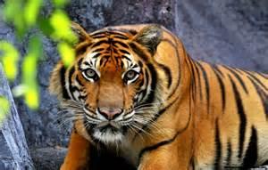 Real Jungle Animals