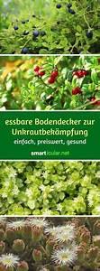 Bodendecker Statt Gras : gartenwege kieselsteinen interessant sch ne garten gestaltung suchen kieselsteinmosaik ~ Sanjose-hotels-ca.com Haus und Dekorationen