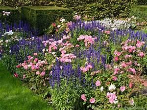 Begleitpflanzen Für Rosen : newsletter bersicht die perfekten rosenbegleiter ~ Lizthompson.info Haus und Dekorationen