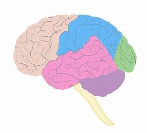 Temporal Lobe Epilepsy