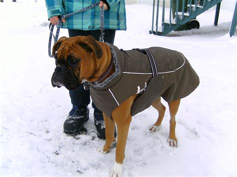 sweaters for boxer dogs small clothes winter pet puppy clothes vest