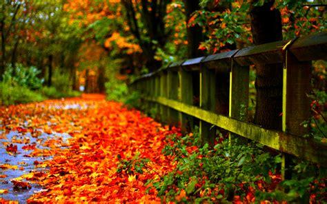 autumn leaves red desktop wallpaper hd