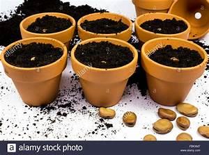 Broad Bean Planting Instructions Ontario
