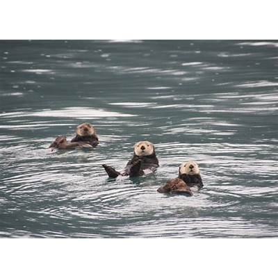 Columbia & Meares Glacier Cruise AlaskaAudley Travel
