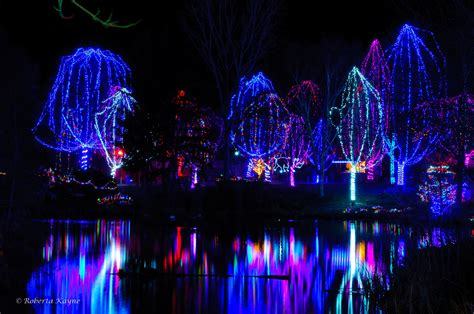 how much does zoo lights cost in phoenix when does zoo lights start az mouthtoears com