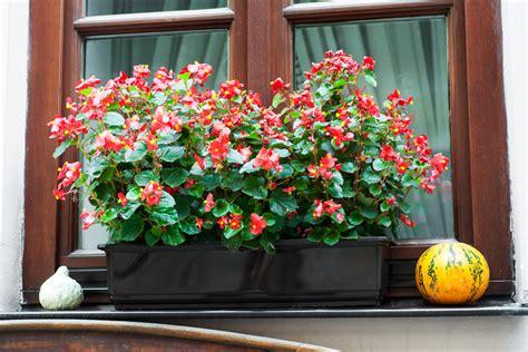 balkonkästen im herbst balkonkasten im herbst 187 diese pflanzen trumpfen jetzt