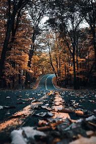 Autumn Beautiful Nature Photography