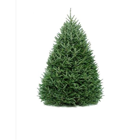 christmas trees lowes fresh 6 7 ft fresh fraser fir tree at lowes