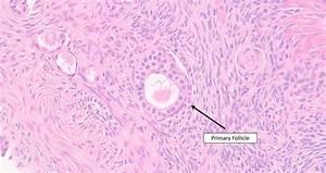 U7acb U6d3e U306a Ts Of Mammalian Ovary