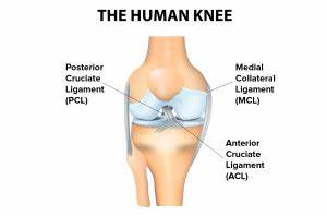 Diagram Of Torn Acl : knee ligament tear spring loaded tech ~ A.2002-acura-tl-radio.info Haus und Dekorationen