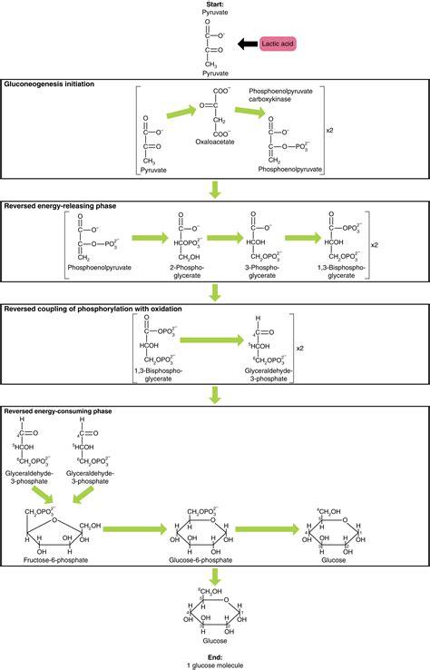 Oxidativer, stress: Was ist das und was kann man dagegen tun?