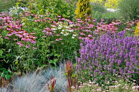 low maintenance perennial garden on a budget the creek