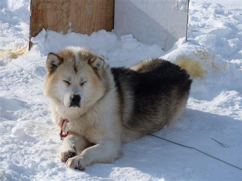 popular dog breeds   world incredible snaps