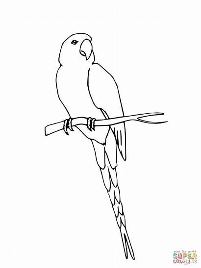 Macaw Coloring Pages Hyacinth Scarlet Jamaican Drawing