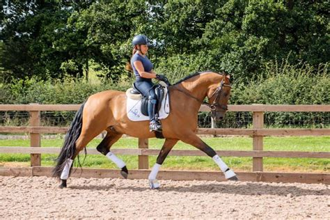 9yo warmblood andalusian stallions ponies horseboxes diary directory horses events