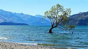 Baum Am Wasser : wanaka baum im wasser neuseeland youtube ~ A.2002-acura-tl-radio.info Haus und Dekorationen