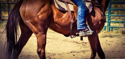 horseback riding asheville near