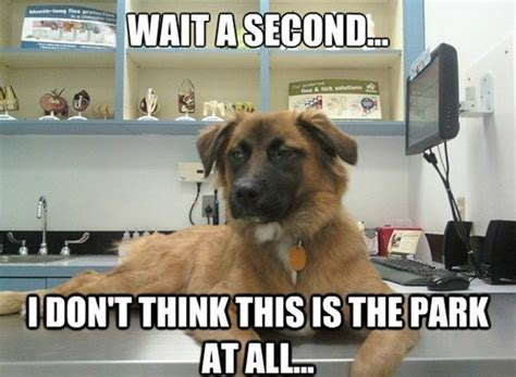 Dog At Vet Meme - 9 dog memes that are so hilarious we can t stop laughing