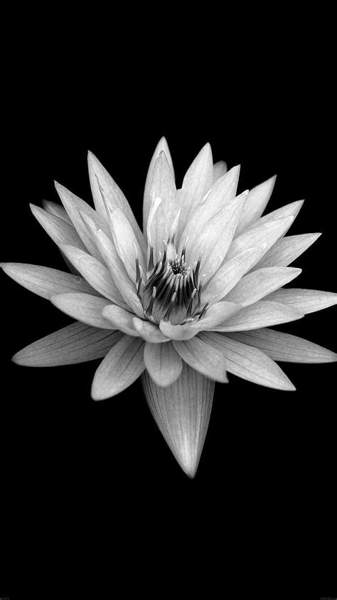 Flower Iphone Black Background Wallpaper by Flower Black Xperia Z Background Iphone 8
