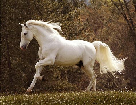 andalusian horse horses running artistwebsites spanish melinda dream rr featured plain
